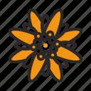 austria, bavaria, edelweiss, flower
