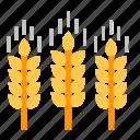 oktoberfest, beer, barley, wheat, agriculture, crop, brewery