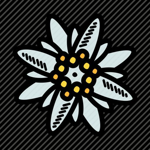 Austria, bavaria, edelweiss, flower icon - Download on Iconfinder
