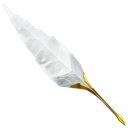 antique, feather, quill, write, writing icon