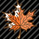 autumn, cold, fall, leaf, season, tree