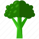 brocolli, food, health, meal, organic, vegetable icon