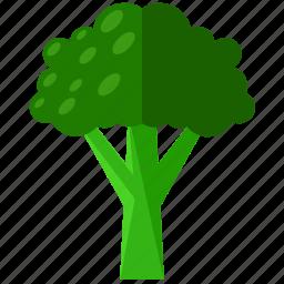 brocolli, food, health, meal, organic, vegetable icon