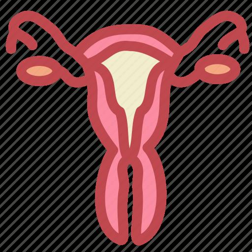 Virgin vaginal anatomy, perfect stranger porn