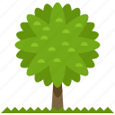 ecology, nature, outdoor, travel, tree icon