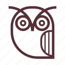 bird, education, night bird, owl, owl bird, owl face, wise