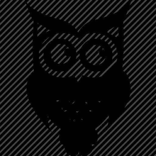 animal, animals, bird, owl, owl bird, owls, wild icon