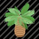tropical, palm, tree, isometric