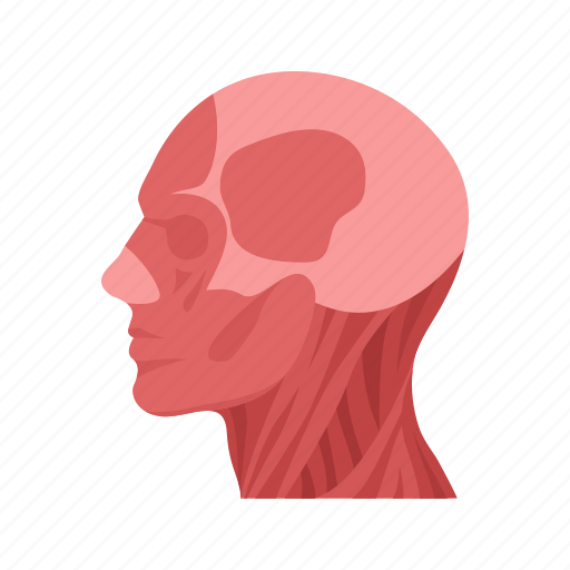 body, head, human, human anatomy, human body, parts of the body, skull icon