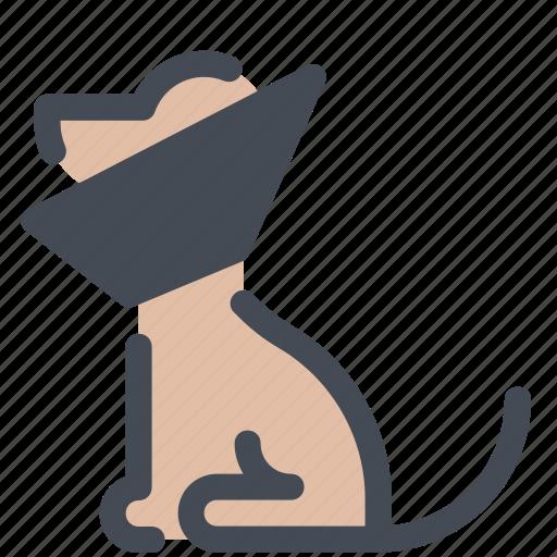 cone, dog, sick icon