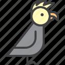 parrot, bird, pet, cockatoo
