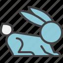 rabbit, hare, animal, pet