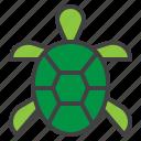 turtle, tortoise, pet, animal