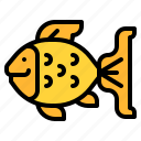 fish, animal, pet