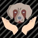 dog, care