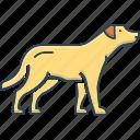 aggressive, bark, dog, keep safe, pooch, protect, retriever