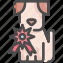 animal, award, beauty, dog, pet, prize, shop icon