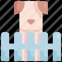 animal, cage, dog, home, house, pet, shop