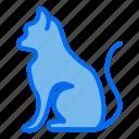 cat, animal, pet, pets