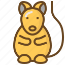 animal, care, hamster, pet, rat, shop, store icon