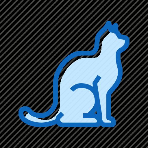 cat, kitten, pet, shop icon