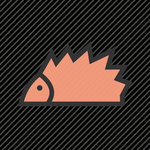 African, brown, cute, hedgehog, hedgehogs, pet icon - Download on Iconfinder