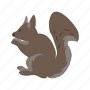brown, squirrel, cute, rodent, animal, mammal, red