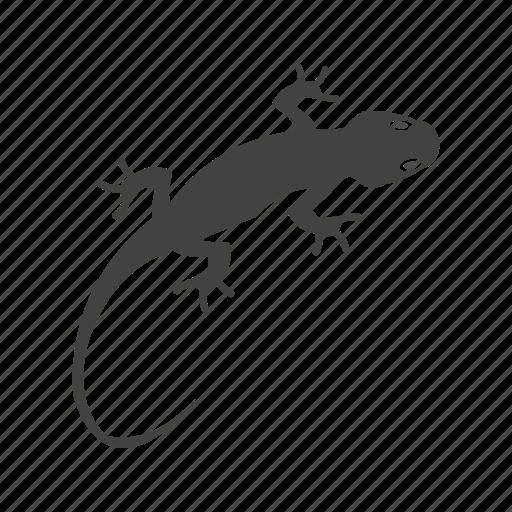 Reptile, color, tail, pet, lizard, animal, orange icon - Download