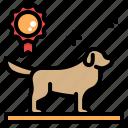 dog, show, contest, breeding, kennels, breeder, golden