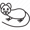 animal, fast, ferrit, pet, rat, soft, speed icon
