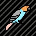 parrot, bird, pet, pets, domestic, animal