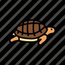 turtle, pet, pets, domestic, animal, dog