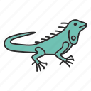 animal, herbivorous, iguana, lizard, pet, reptile, wildlife icon