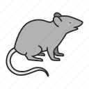 animal, mice, mouse, pest, pet, rat, rodent
