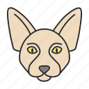 animal, canadian, cat, kitten, pet, sphinx, sphynx icon
