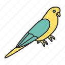 animal, bird, budgerigar, budgie, ornithology, parrot, pet