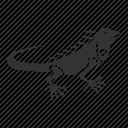 Animal, herbivorous, iguana, lizard, pet, reptile, wildlife icon - Download on Iconfinder