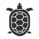 animal, marine, pet, reptile, tortoise, turtle, zoology icon