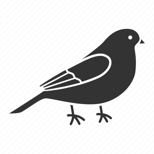 animal, bird, canary, ornithology, perrot, pet, songbird icon