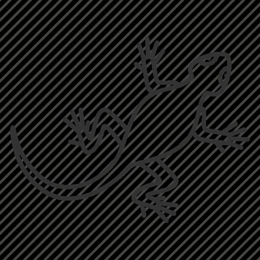 Animal, gecko, lizard, pet, reptile, salamander, zoology icon - Download on Iconfinder