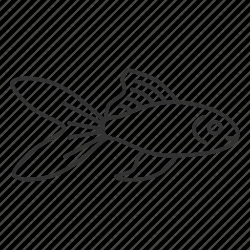 Animal, aquarium, fish, fishbowl, fishkeeping, goldfish, pet icon - Download on Iconfinder