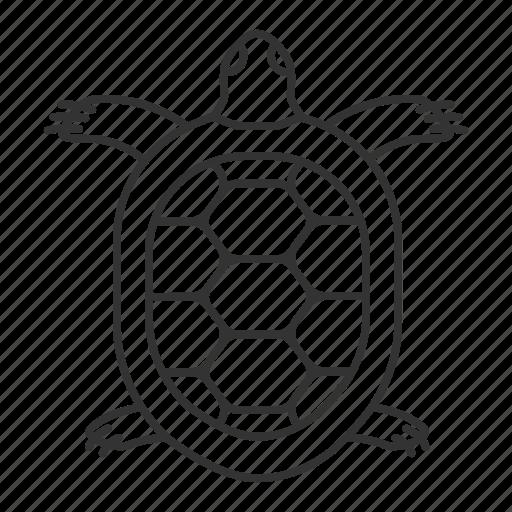 Animal, marine, pet, reptile, tortoise, turtle, zoology icon - Download on Iconfinder