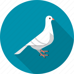 bird, communication, dove, message, tweet icon