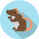 animal, domestic, mouse, mus, pet, rodent icon