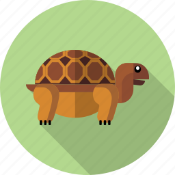 animals, nature, pet, reptile, turtle icon