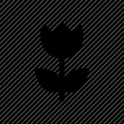 camera, image, macro, photograph, photography, tulip icon