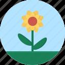 flower, grass, leaf, macro