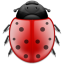 bug, insect, animal, ladybird