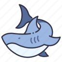 fish, nature, ocean, sea, shark, water