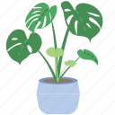 gardening, plant, tree, ecology, garden, leaf, decoration